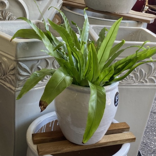 Ethans Courtyard and Patio Bonita Springs | White Flower Pots | Bonita Springs | Water Fountains, Wall Fountains, Mailboxes, and more | Pottery Store